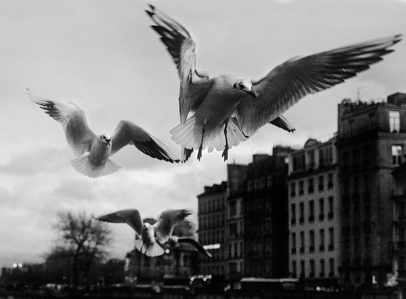 parisbirds.jpg