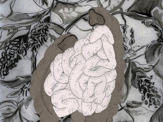 ENCAPSULATION OF PROBIOTICS : Balancing the bacteria flora in your gut
