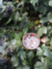 Boule-graisse12.jpg