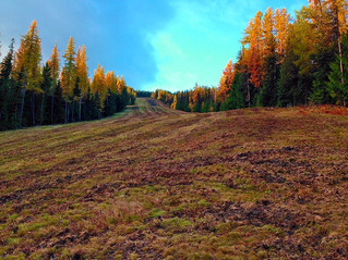 Fall Colours at Silver Star
