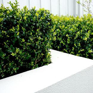 Karen Wagner Garden Design, Hobart, Australia. Garden design & store. KWGD Contemporary gardens.