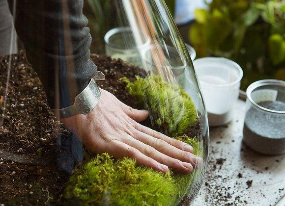 Terrarium Workshop : Making beautiful terrariums
