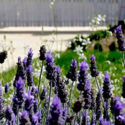 KWGD French garden 1