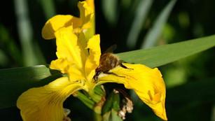 Questions/Réponses sur la biodiversité