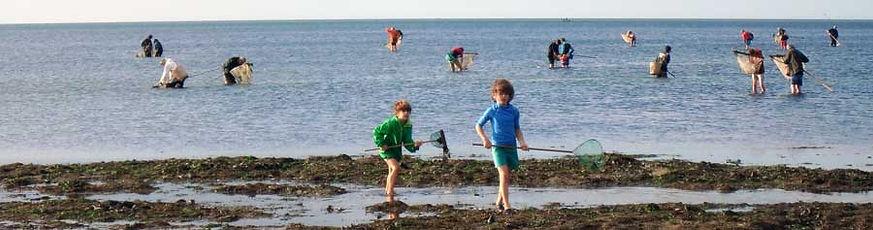 Pêche à pied parmi les rochers du Calvados, sur la Côte de Nacre