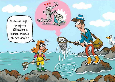Cartes postales PAPL Crevettes grainees