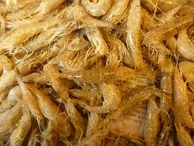 Crevettes grises de la Côte Fleurie, dans le Calvados