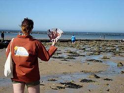 Comptages des pêcheurs à pied du Calvados