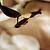 Chokladmassage med jade 1 person 60min