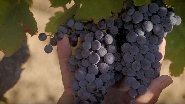 Napoléon Brizi (vin de Corse)