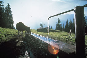 Käse, Alpkäse, Alpschaukäserei Schwägalp, Schwägalp, Urnäsch, Säntis, Schweizer Käse