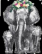 Elephants .png
