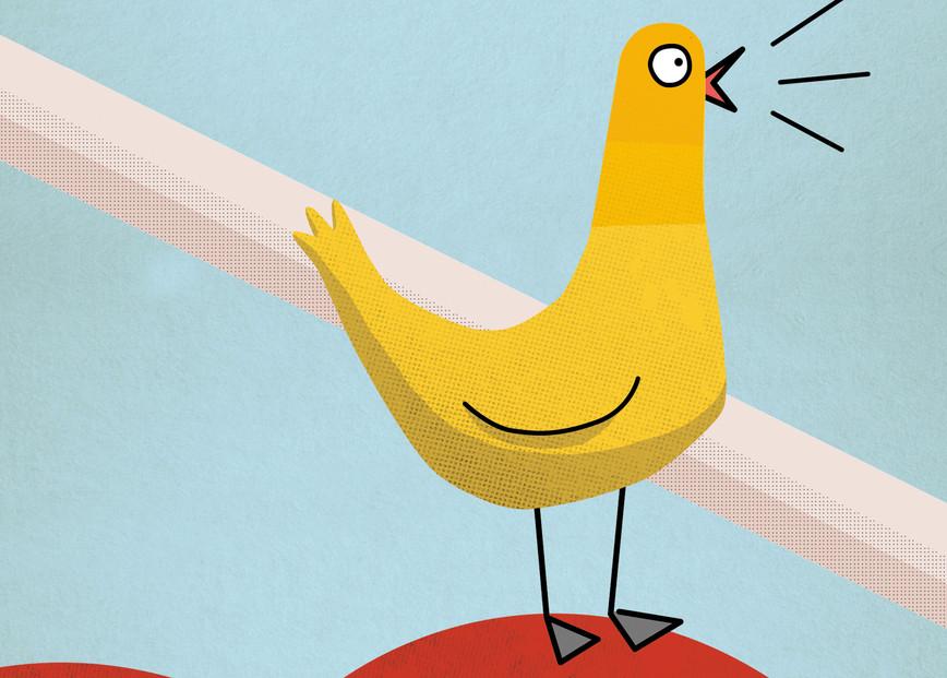 pigeon jaune