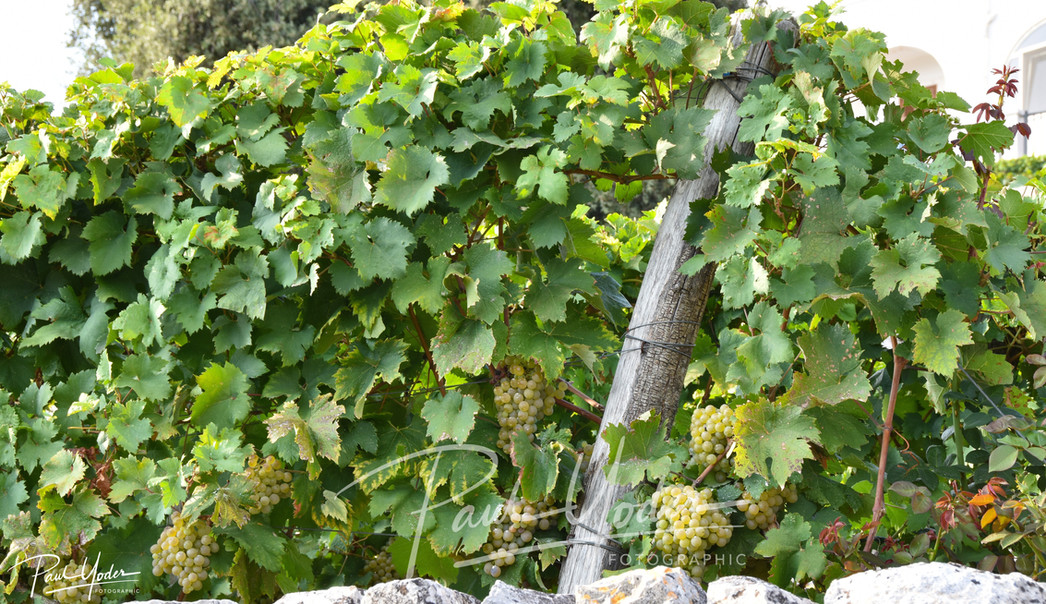 Puglia wine tours holiday Experience
