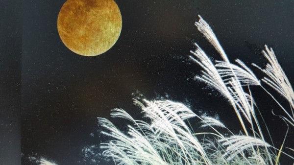 お月見 写真.jpg