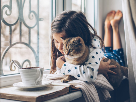 Creating a CALM Environment at Home and Why it's Important