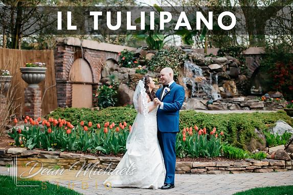 iL Tulipano_Web Gallery.png