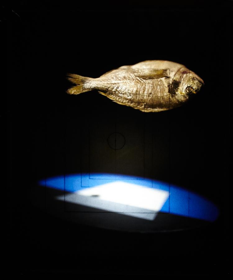 ryba ufo 900