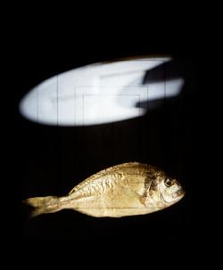 ryba ufo 2 900