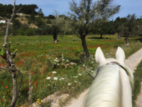 Paardrijden Ibiza