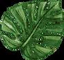 leaf_logo-03-03.png