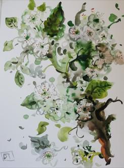 il ramo di melo in fiore.jpg