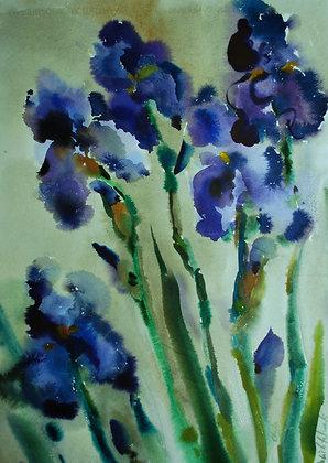 Il canto del'iris
