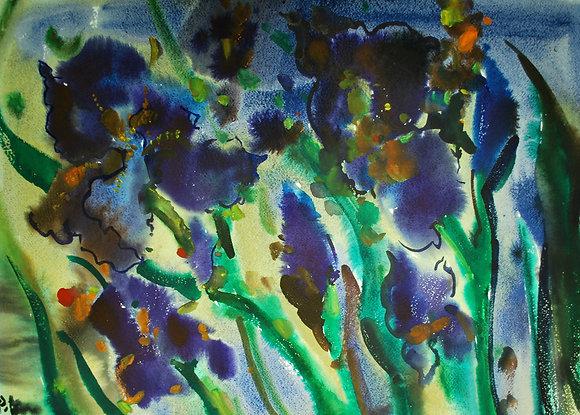 Iris furiosi