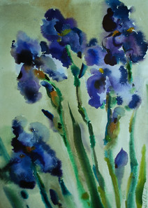 Iris in verticale