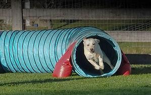 Home Grown Dog Sports-7.jpg