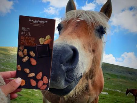 שוקולד טבעוני איכותי ? כן בנג'מיסימו/  Vegan chocolate Benjamin