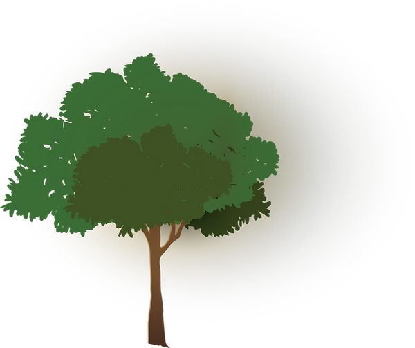 tree2png.png