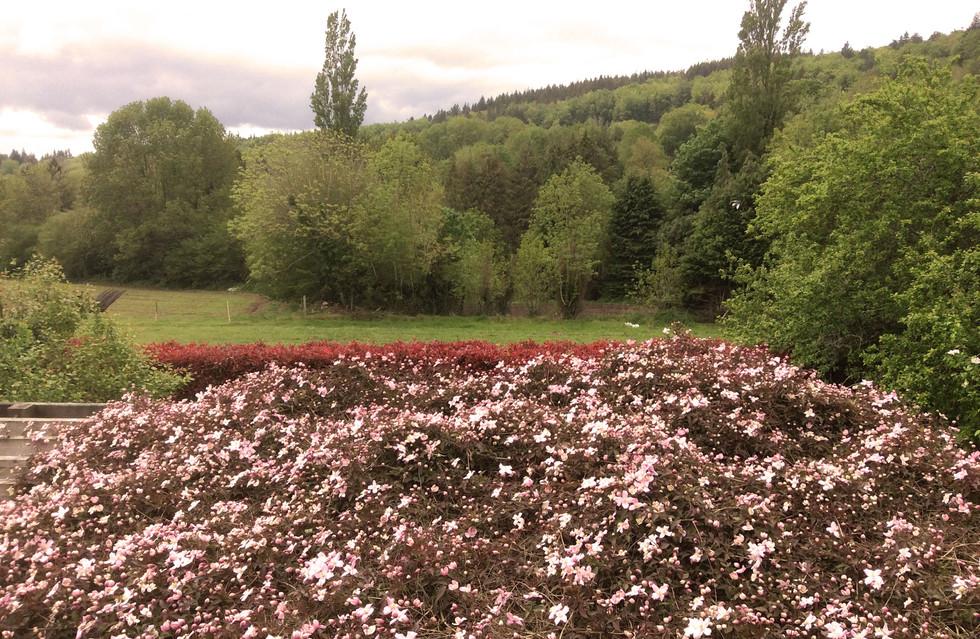 garden at La Madeleine
