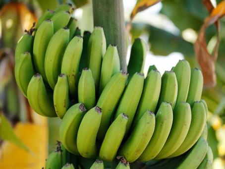Chips de banana verde: a arte de gerar novas sensações com ingredientes já conhecidos.