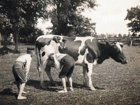O leite e seus deliciosos derivados