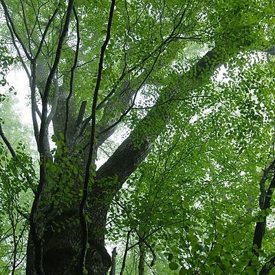 森の中の森の家 in 京都静原