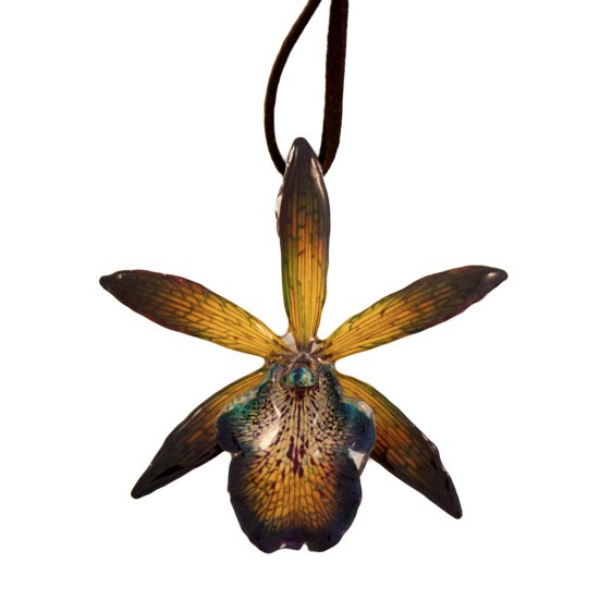 Orchid Treasures Australia