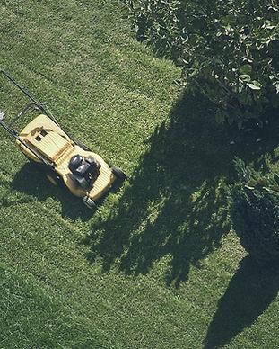 Trimming the Grass