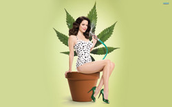 WEEDS  /  Co-Producer