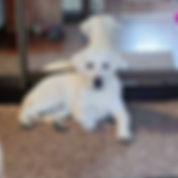 SelfieMaster-20190106-141804735_v2.jpg