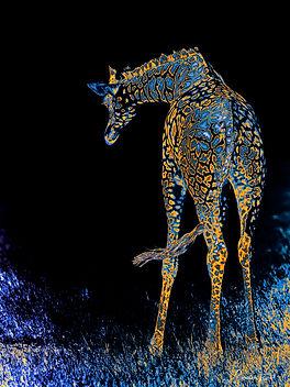 Girafe_MD.jpg