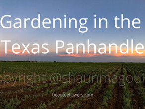 Gardening in the Texas Panhandle (zone 6b)