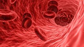 El angiogénesis nos protege de enfermedades