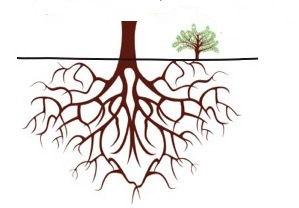 sucker-offset-drawing-no-tree.jpg