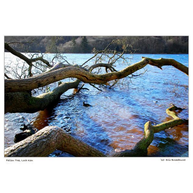 Fallen Tree, Loch Ken.jpg