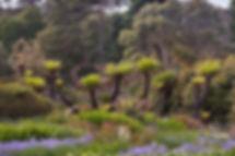 Logan Botani garden logan-pond-wg-colour