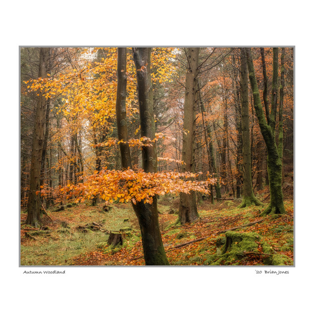 Autumn WoodlandC_C.jpg