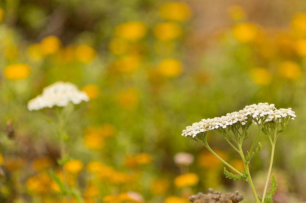 Big Sur Flora