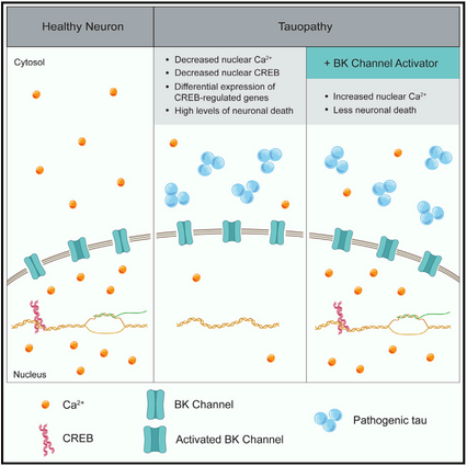 Frost lab publishes in Cell Reports