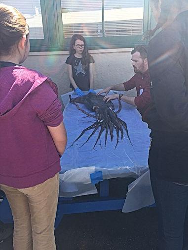 Marine Invertebrates Elective Class